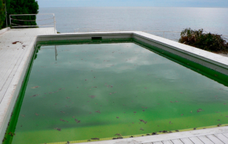 piscina está verde